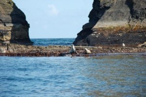 Seal at the Sovereign Islands
