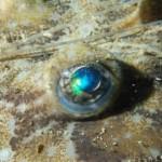 The Eye of the angler