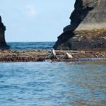 Seals at the Big Sovereign Cork