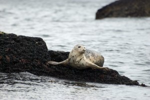 Seal, diving, ireland cork marine life,