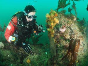 Diver Exploring Underwater Kinsale
